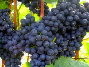На встрече с Дмитрием Патрушевым севастопольские виноделы внесли свои предложения по развитию виноделия в России
