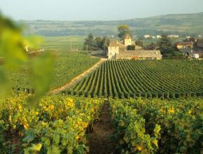 Во Франции прогнозируют увеличение производства вина на 27%