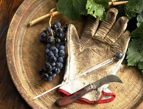 Производители предложили создать Федеральное агентство по виноградарству и виноделию