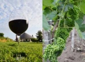 В Краснодарском крае появился первый винный кооператив