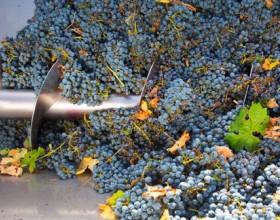 Заксобрание Кубани выступает за снижение барьеров для виноделов