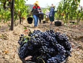 Путин поручил подготовить предложения по защите интересов отечественных виноделов