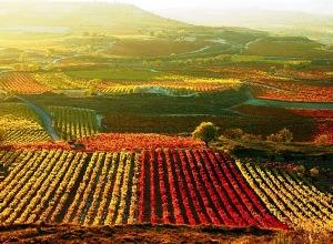 Еврокомиссия утвердила четыре новых защищенных наименования мест происхождения вин